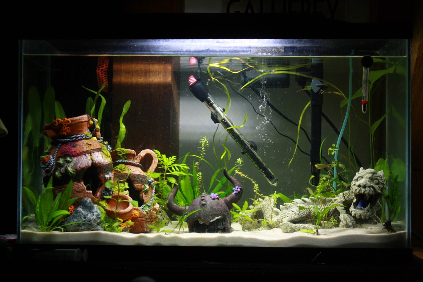 Fish aquarium is good in home - I Only Have Good Pictures Of The 29 Gallon Tank I Ll Have To Get Some New Pictures Of The 10 Gallon When I Get Home