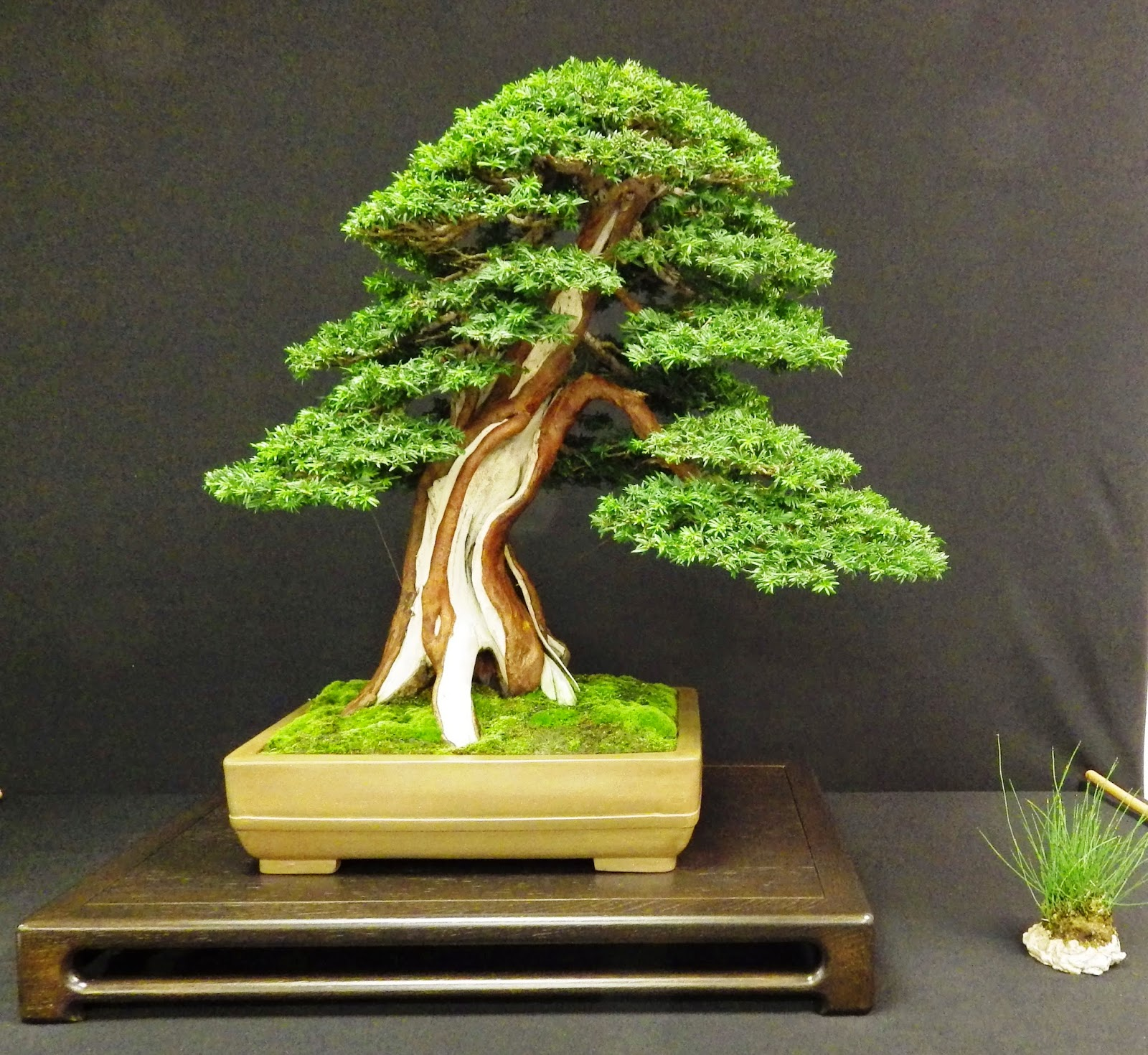 Bespoke Bonsai Stands Capel Manor Autumn Bonsai Show October 2014