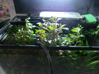 Fishtank plant growth vacation