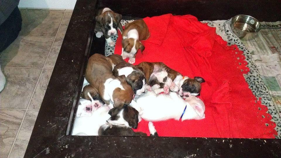 Rescue+Puppies.jpg
