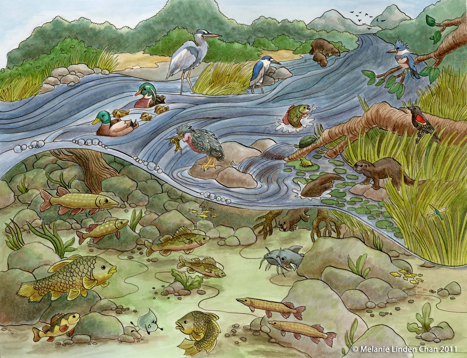 It's a Hoot!: From Start to Finish: River Habitat!