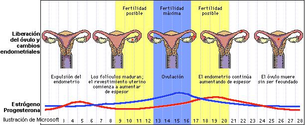 menstruacion del utero submited images