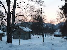 Øyskogen