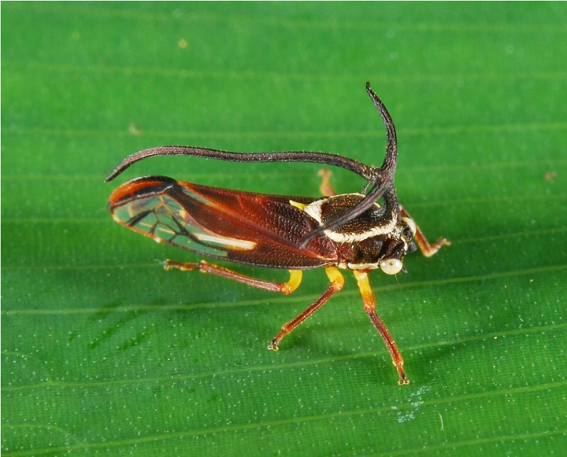 insects can be found around the world Entomophagy is a common practice in many parts of the world  journal of insects as food and feed found that 72 percent  up how eating insects could.