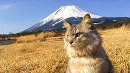 Γάτα Fuji