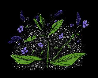 Flower Image Transfer Brooklime Wildflower