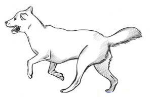Corso di grafica e disegno per imparare a disegnare come for Cane disegno facile