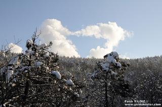 Aydos Ormanları Kış