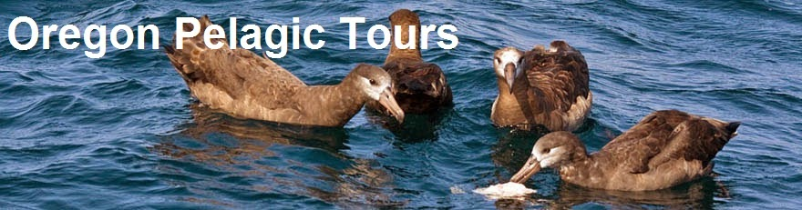 Oregon Pelagic Tours