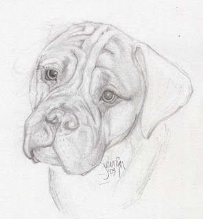mastiff drawing @fuzzydragons.com