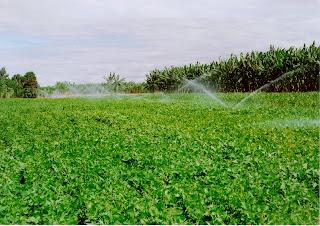 Crédito especial para agropecuária irrigada libera R$ 195,5 milhões em financiamentos