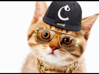 funny cat picture cat rapper you and me battle