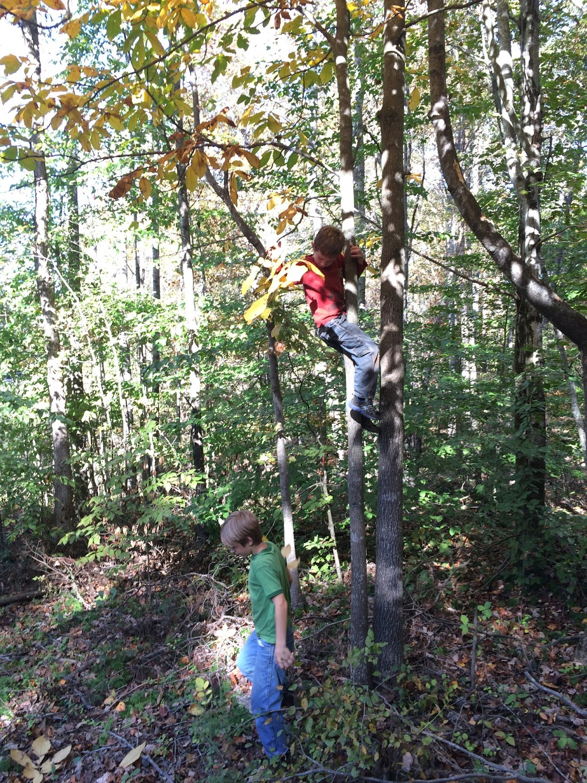 The johnson journals do it yourself homeschool journals review week 1 not to be outdone e climbed really high and stood on a branch shaking the entire tree making leaves rain down on all of us solutioingenieria Image collections