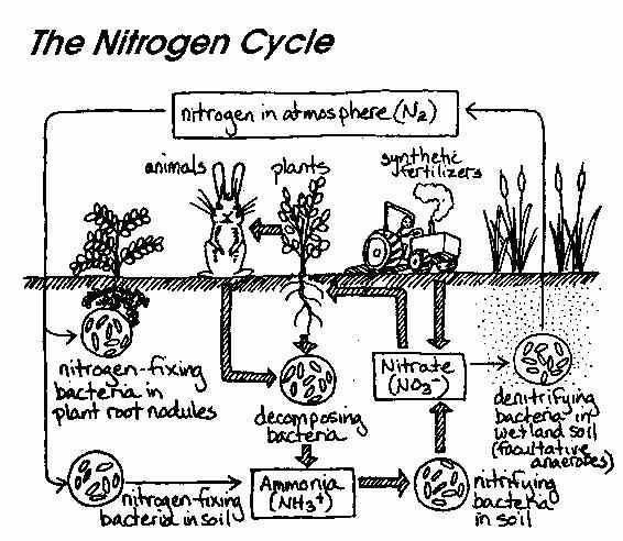 Ib biology chemistry