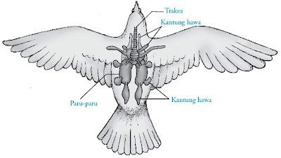 Alat respirasi burung