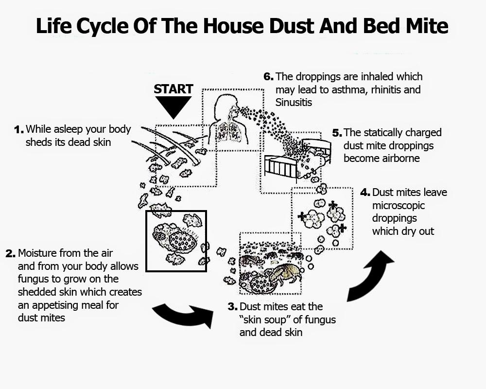 Dust Mite Allergy Kill Dust Mite