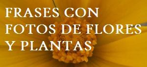 Frases con fotos de flores y plantas