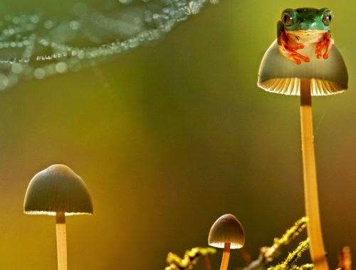 11-Wil-Mijer-Frog-Macro-Photography-www-designstack-co