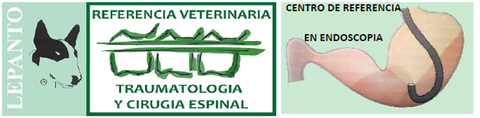 Endoscopia Veterinaria Lepanto