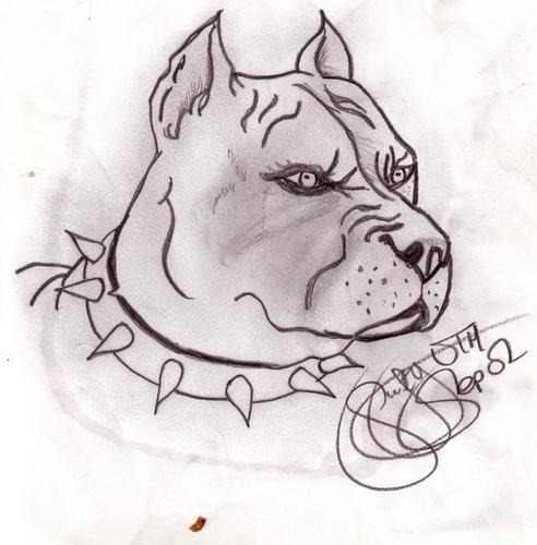 Perrosde lapiz pit bull  Imagui