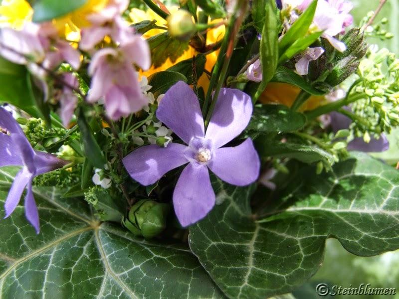 Vinca Blüten
