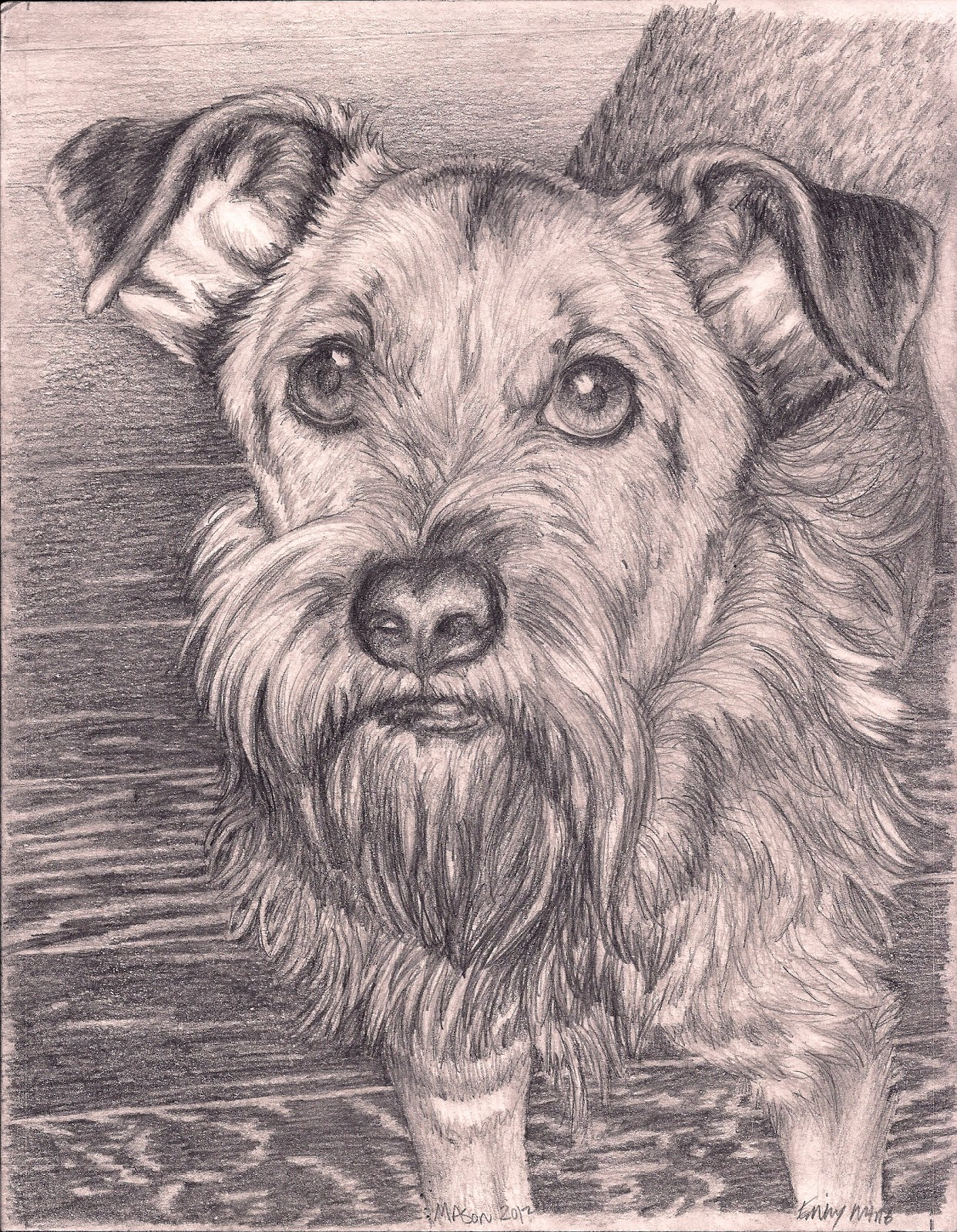 Hopeful Hearts Dog Rescue Wilmington De