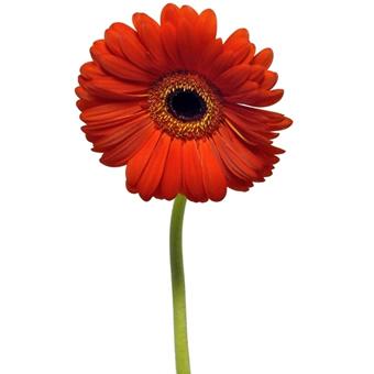 Mundo de infantil tipos de flores y sus caracter sticas - Todo tipo de plantas con sus nombres ...