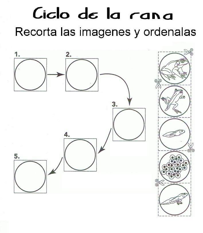 tren cycles