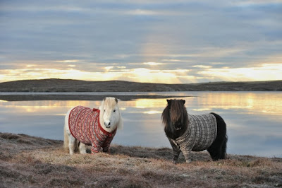 Visit Scotland's picture of two Shetland ponies in fair isle cardigans
