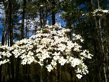 #5 Stunning Flowers Blooming