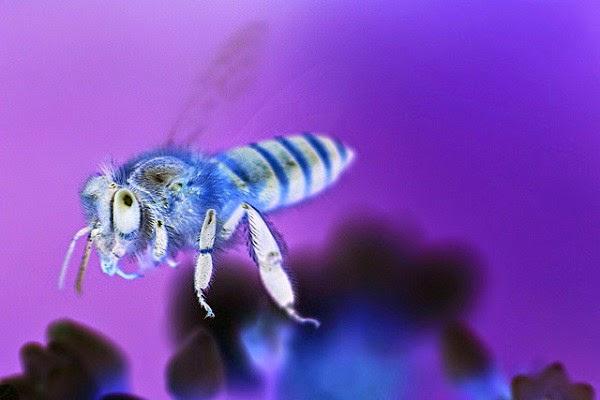 Mengobati dan Menghilangkan Bekas Gigitan Serangga