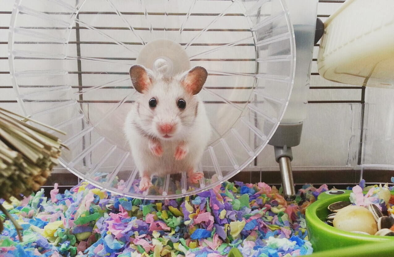Funny animals of the week - 31 January 2014 (40 pics), mouse inside a cage