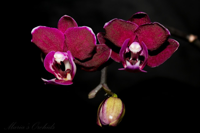 Image Result For Different Color Orchids