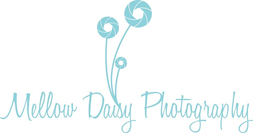 Mellow Daisy Photography