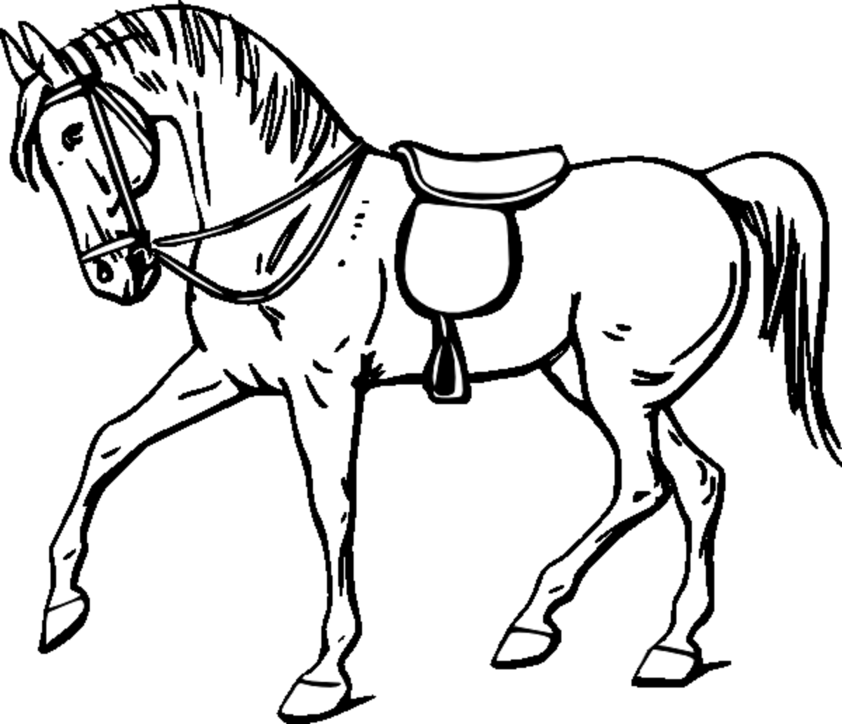 horse for kids coloring page free wallpaper