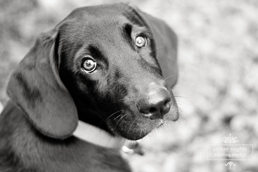 Beautiful Dog Photography wallpaper 1080p