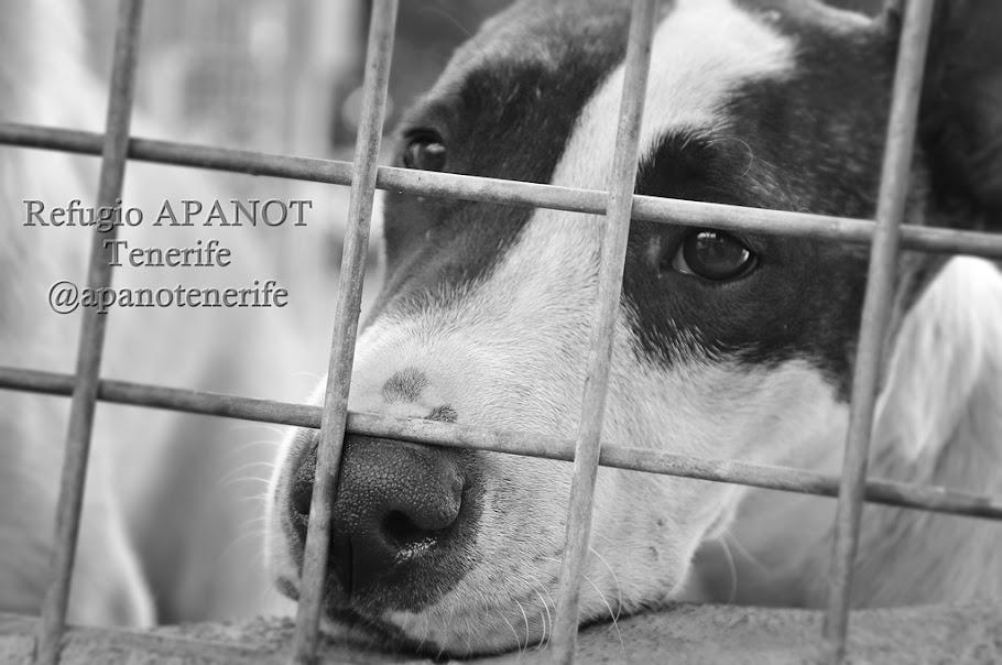 Portagonista de la semana: Proyecto APANOT