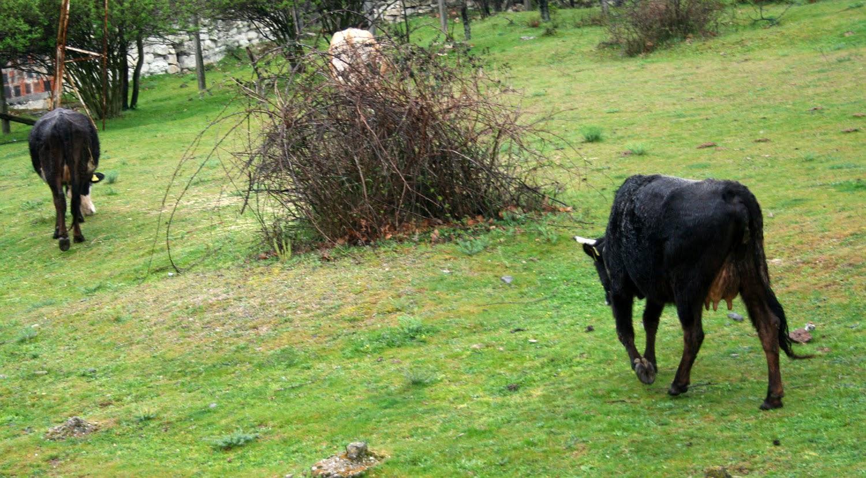 Raiding me for my grass