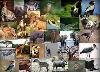 هل تعرف ما هي الحيوانات التي ذكرت في القرآن الكريم ؟؟