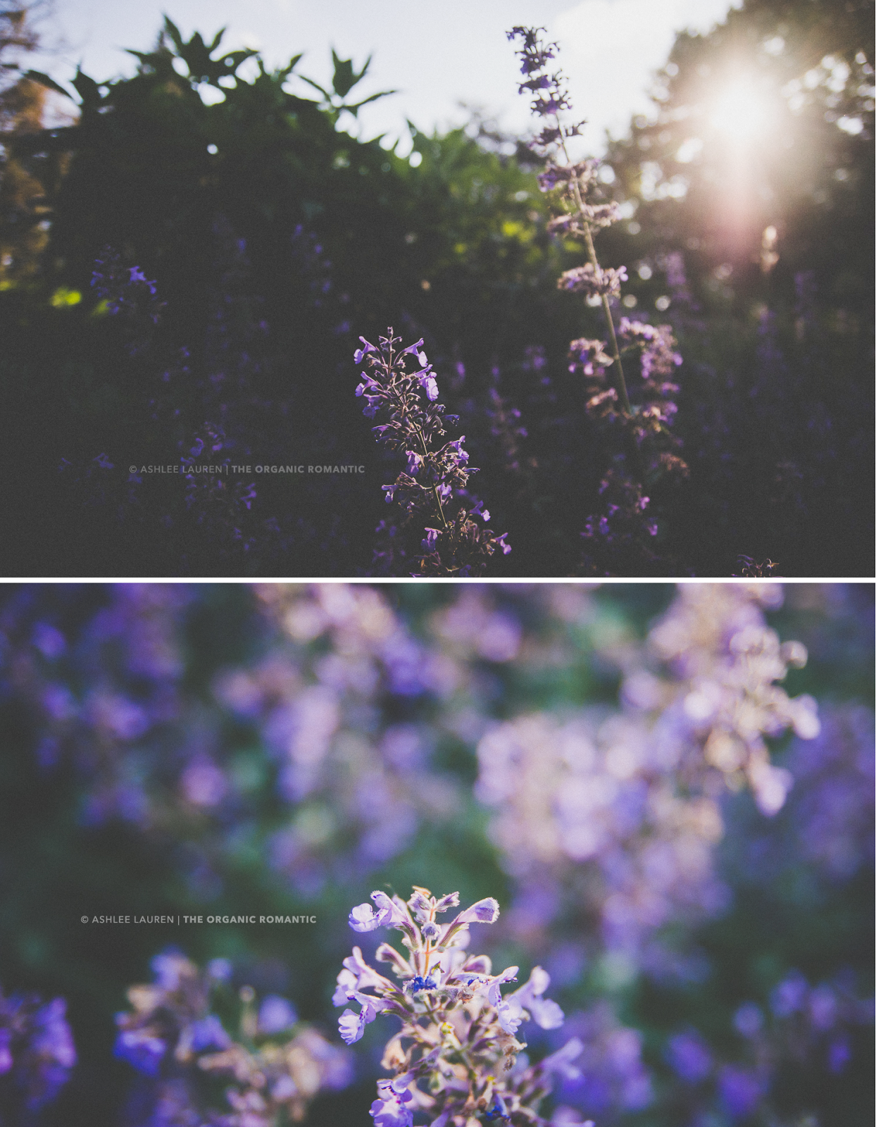 flowers and gorgeous sunlight at an outdoor photography session in indianapolis, in