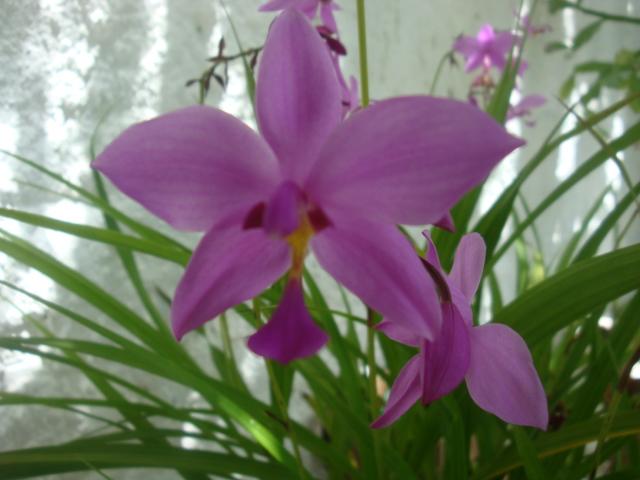 flores do meu jardim face:Meu Jardim é Assim