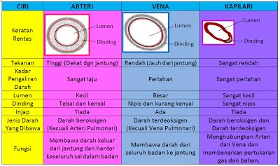 Perbezaan Saluran Darah Arteri,Vena danb Kapilari