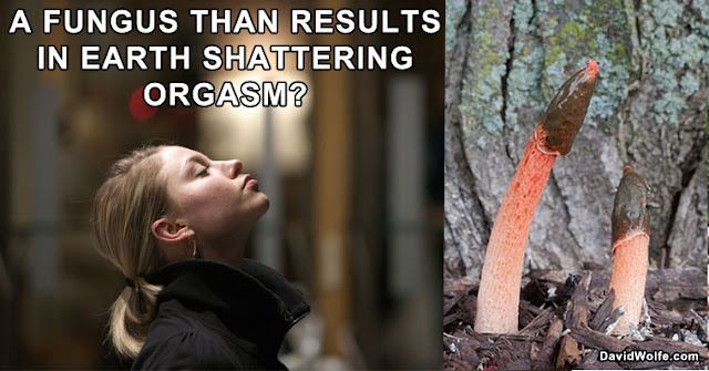 This Fungus Will Induce An Earth Shattering Climax in Women