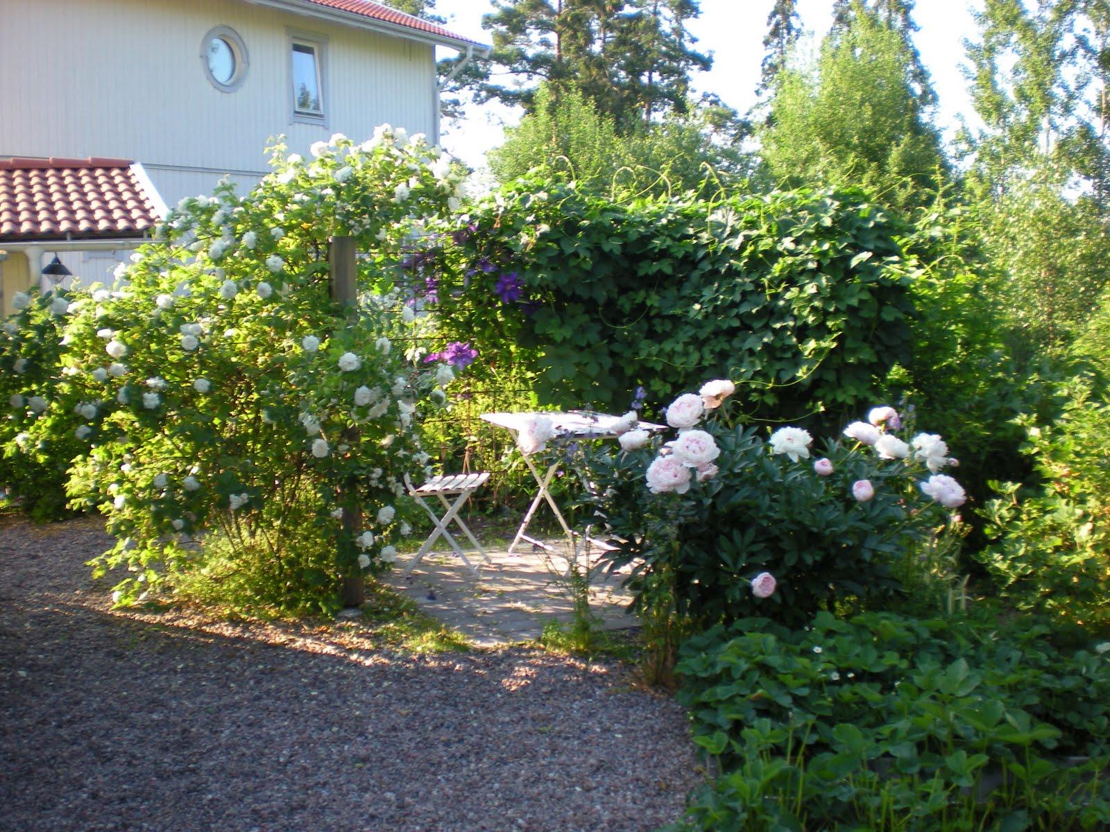 Trädgård på berget: Blommande växter