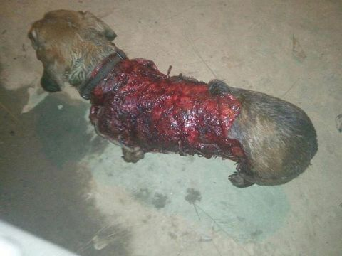 Human skinned alive - photo#23
