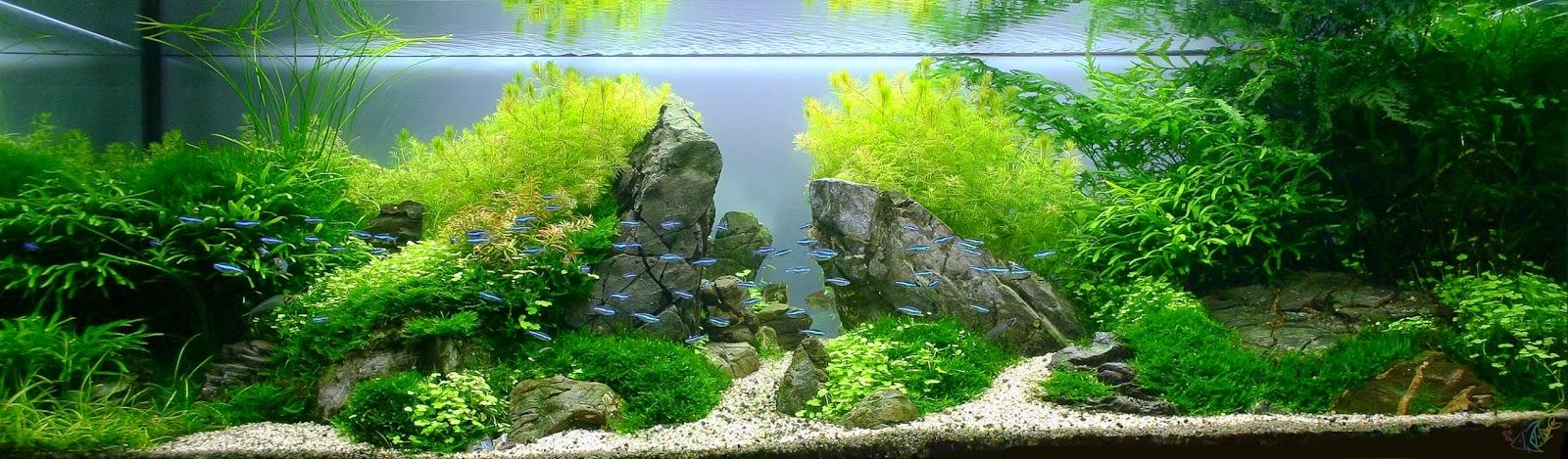 Фотогалерея голландских аквариумов и дизайн