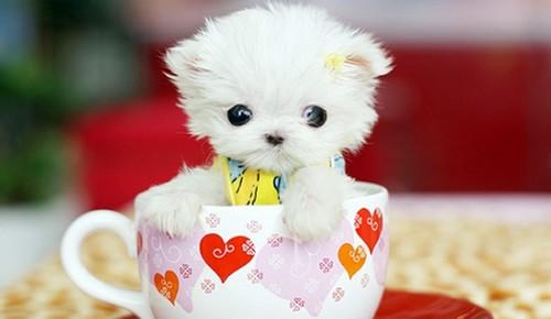 Foto Anak Anjing Paling Lucu