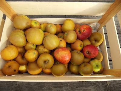 Pommes Colapuis et Reinette de France