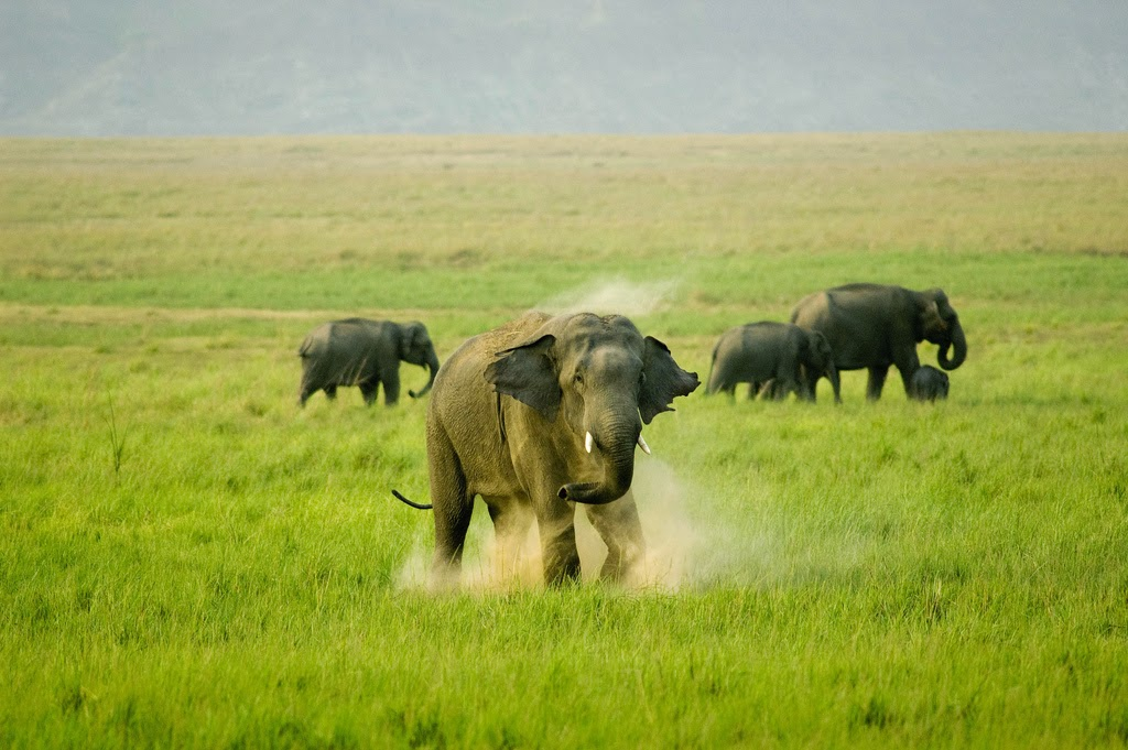 Corbett India  city pictures gallery : Jim Corbett National Park in Uttarakhand, India ~ HISTORY OF INDIA
