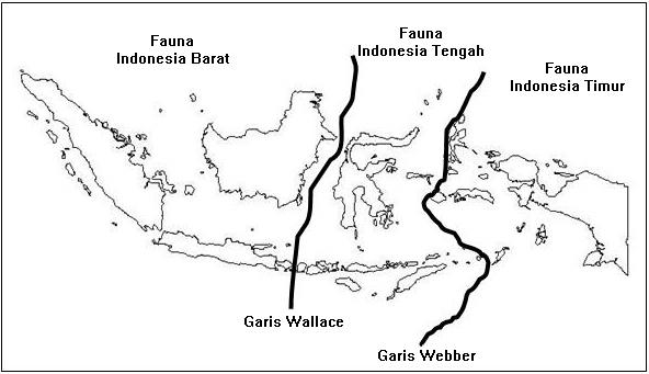 fauna dan flora peralihan dengan jenis fauna dan flora australis
